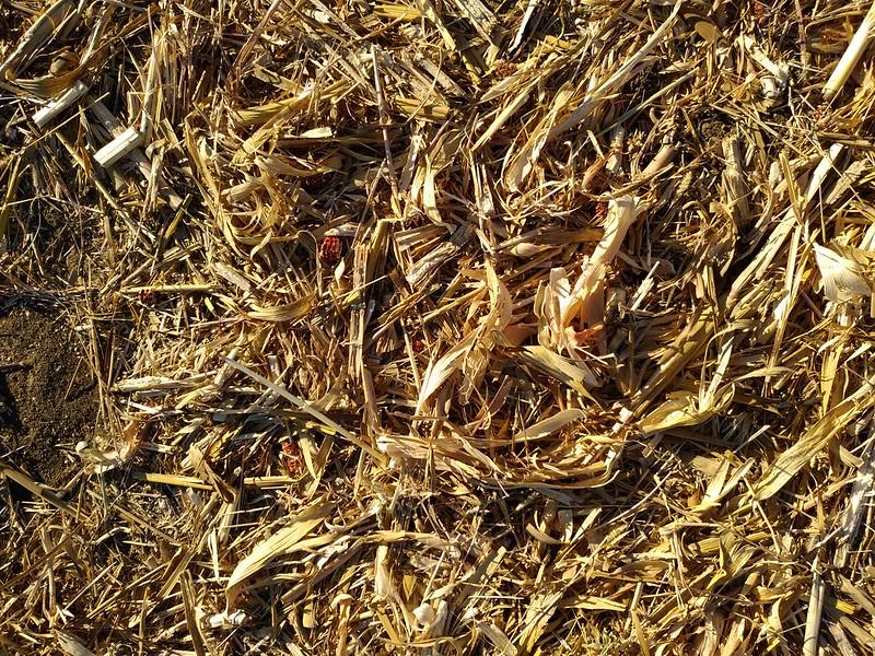 Ground texture #14