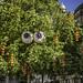 Googly eyed tree