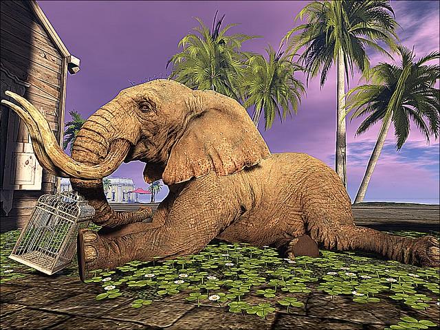 Little Havana - Lying Elephant
