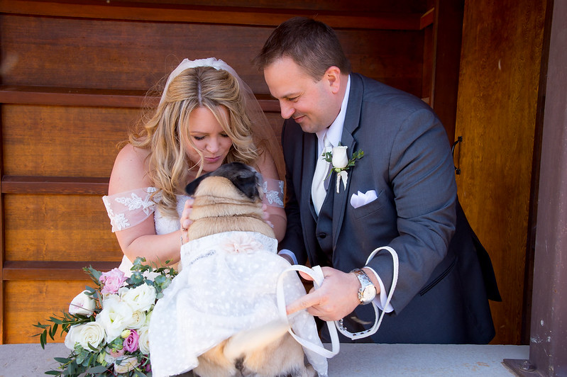 A wedding dream come true! A happy couple includes their pug in the celebration!
