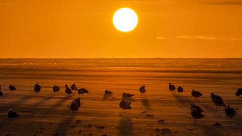 sunrise sun orange beach ocean stoneharbor stoneharborpoint newjersey bird birding birdwatching birds sigma150600sport sigma nature nikond500 nikon