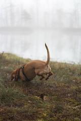 dog_Tūve