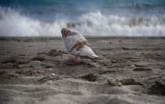 Un paseo por la playa