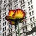 Ordinary and extraordinary New York by Yuri Dedulin