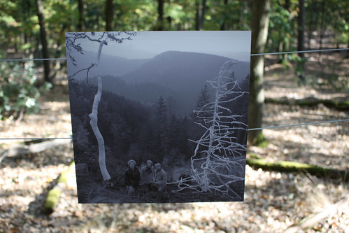 Trough a forest 09