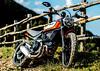 Ducati SCRAMBLER 800 Icon 2019 - 18