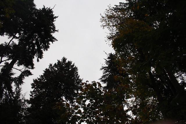 IMG_5631, Canon EOS REBEL T4I, Canon EF-S 18-55mm f/3.5-5.6 IS STM