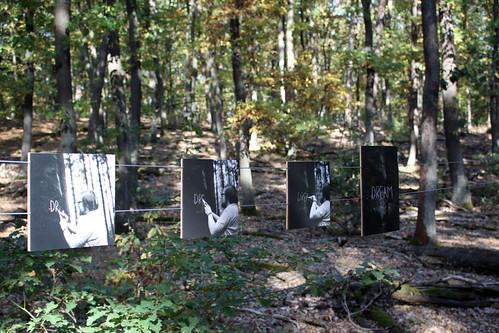 Trough a forest 06