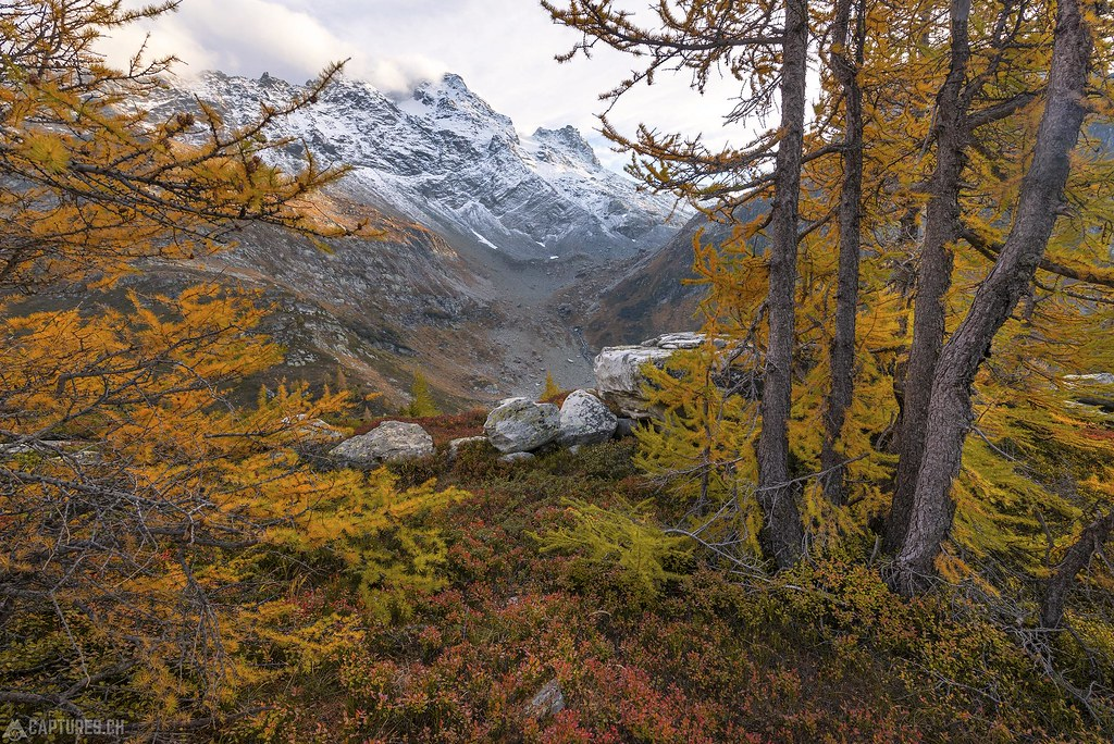 Larch gold - Binntal