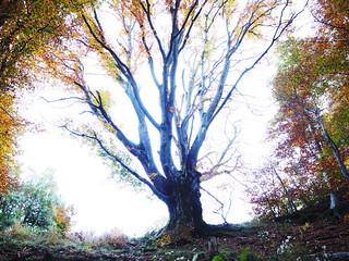 The Bright Tree