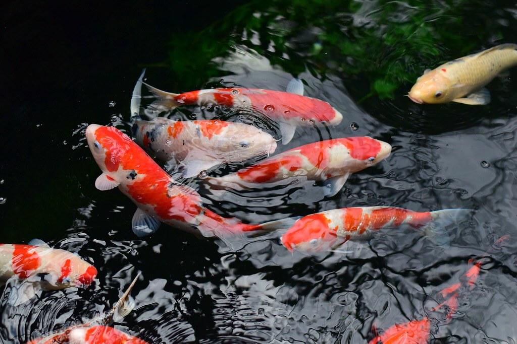 Había gran cantidad de peces para delicia de los niños