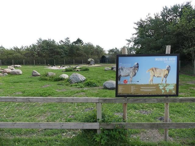 Anlage für Hängeohrziegen, Zoo Givskud