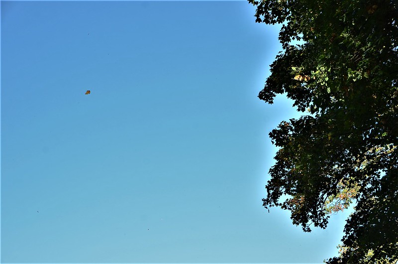 Autumn trees 16.10 (2)