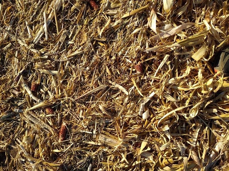 Ground texture #15