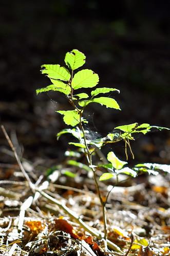 in the woods (III)
