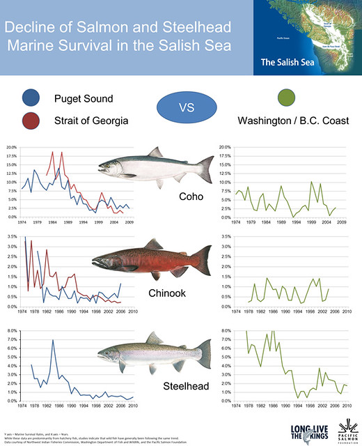 Decline-of-Marine-Survival-in-the-Salish-Sea2