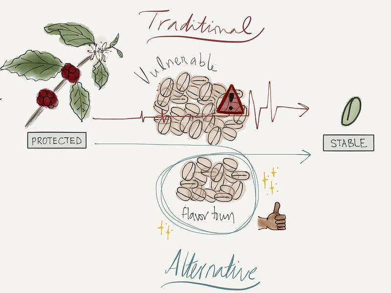 Quá trình lên men cà phê - Coffee Fermentation