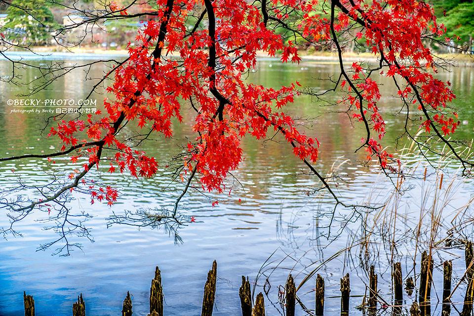 2017.Nov 白河南湖公園@Fukushima,Japan