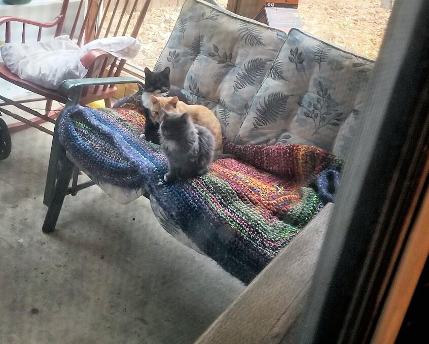 20181016.innocent.kitties