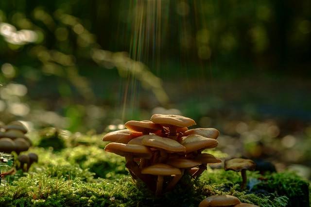 Mushrooms, Fujifilm X-E1, XF60mmF2.4 R Macro