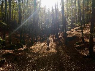 Bokskogen Åkulla