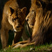 Jasiri and Josie