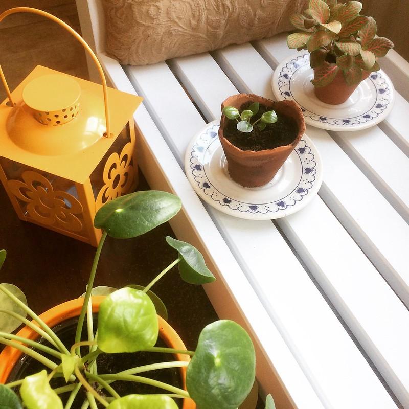 Kamerplanten en stekjes