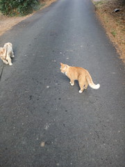 IMG_20180916_083029 - Photo of Montner