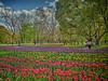Photo:チューリップの花園で XVIII By jun560