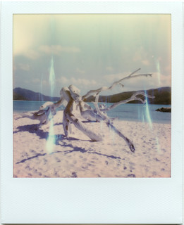 Roid week day 3, photo 1: Blinding White