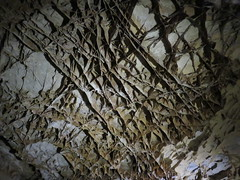 Wind Cave Boxwork Formation (Wind Cave National Park, South Dakota)