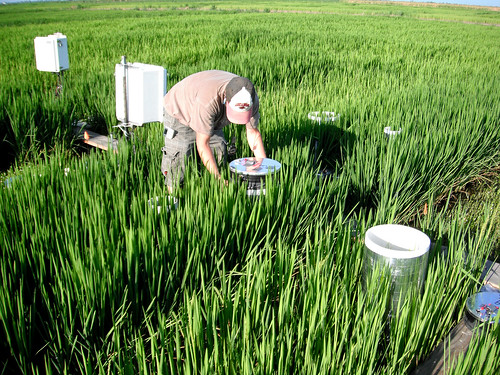 Methane Emissions from Rice