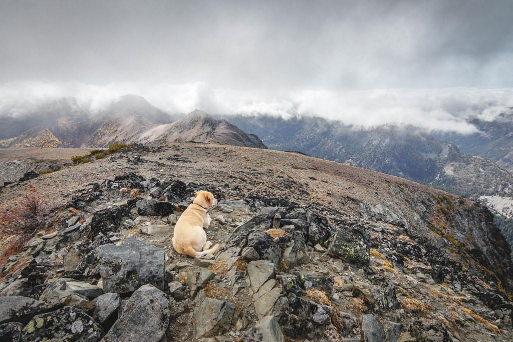 Summit dogs on Big Jim Mountain