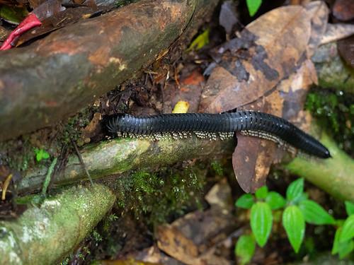 sinharajaforestreserve asie continentsetpays srilanka asia lk lka réserveforestièredesinharâja southernprovince
