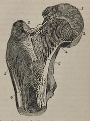 This image is taken from A system of anatomy for the use of students of medicine (Volume 1)