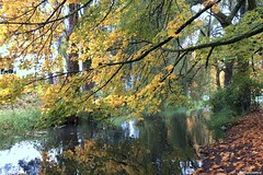 Fall Foliage along North Creek