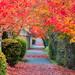 Redmond Colors