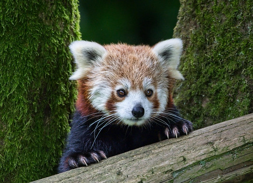 Belfast Zoo 2018 photo competition