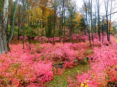 Pink Autumn Forest