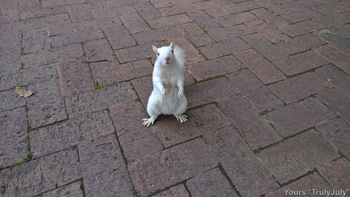 Well, hello there! A white squirrel says hi at Company's Garden.