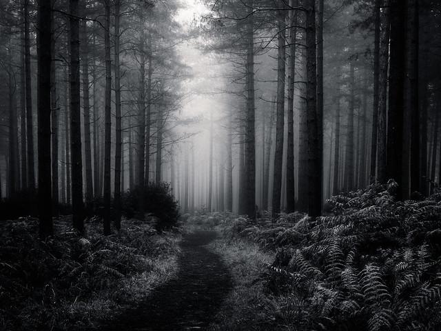 Misty Wood - Aldershot
