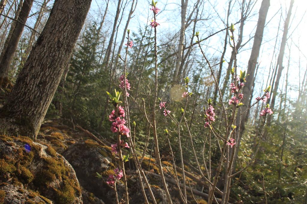 Bruce Trail: Spirit Rock CA