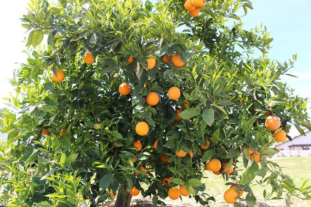 Hint of Orange
