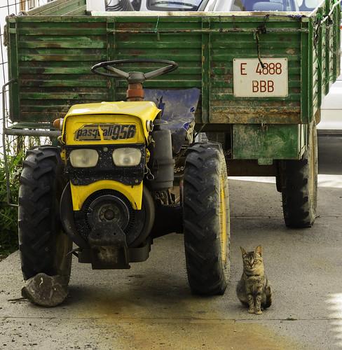 Gato guardián