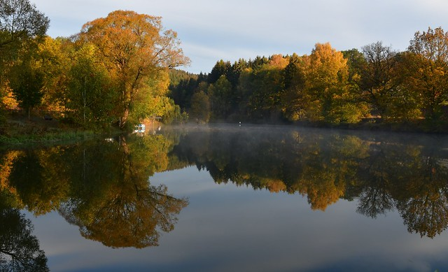 Mystical morning at the pond