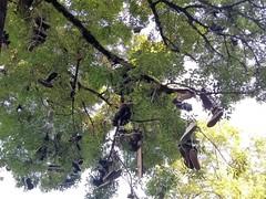 SNEAKERS TREE