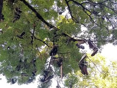 SNEAKERS TREE - Photo of Marsac
