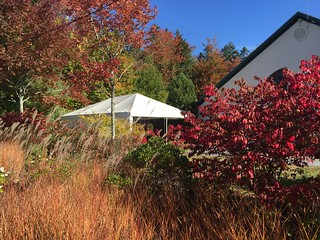 Foliage at the Pemaquid Hall