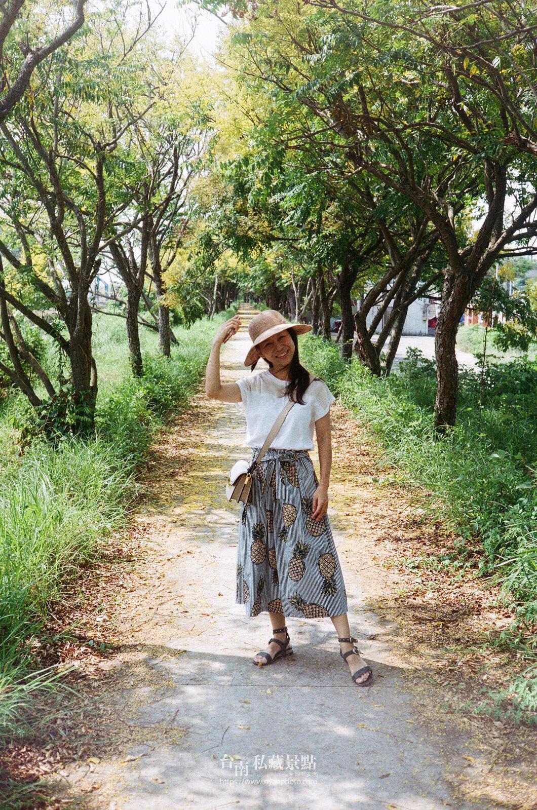 台南台灣欒樹17