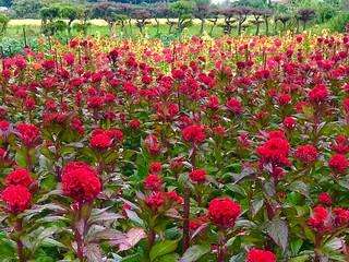 彩豊かな花畑